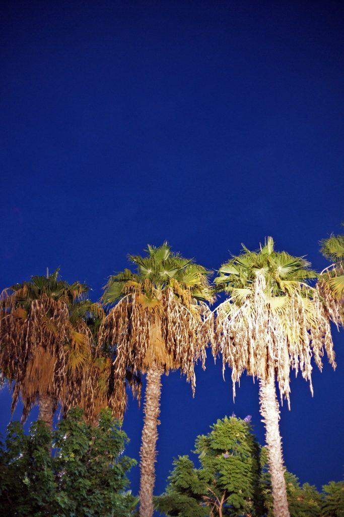 Palms, Tel Aviv, Samantha Font-sala