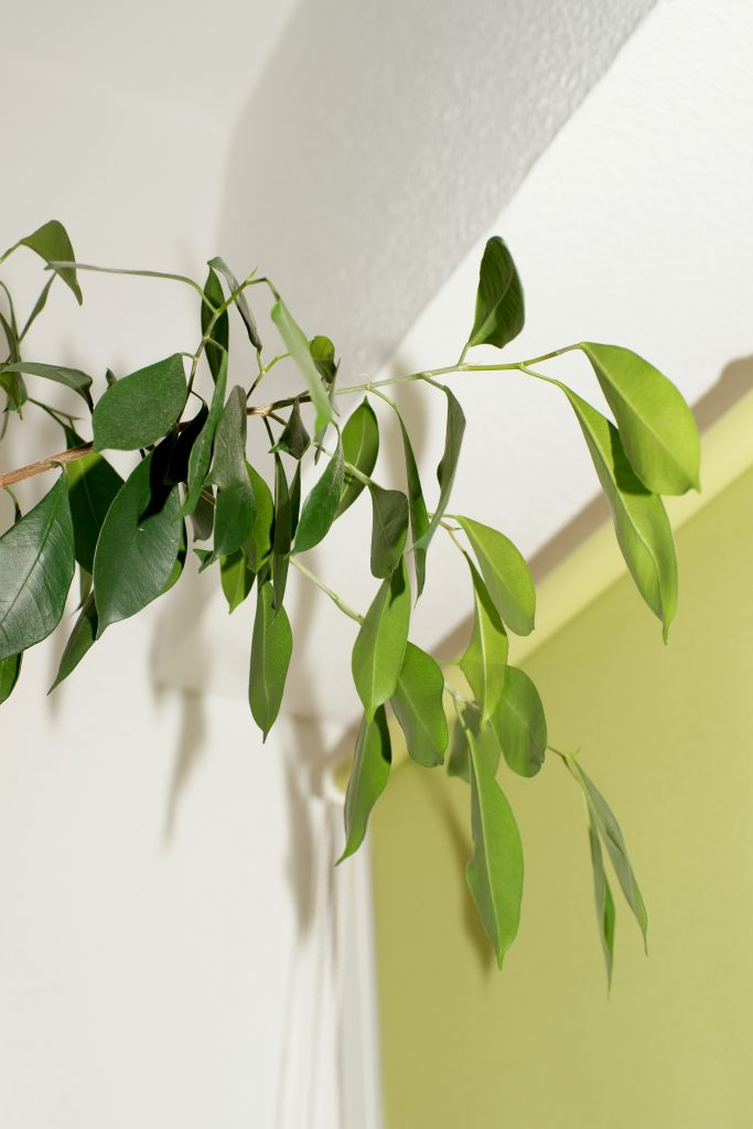 Plants, Erfurt, Samantha Font-Sala